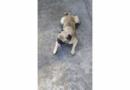 Família procura por cachorro desaparecido em Itaipuaçu