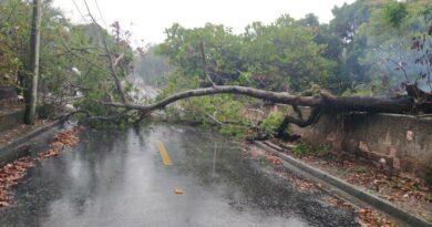 Árvore cai e interdita rua em Ponta Grossa