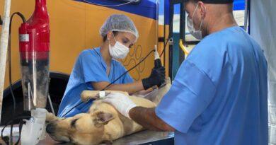 Maricá inicia castração de animais em Inoã e São José do Imbassaí nesta quarta