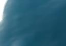 Golfinhos são flagrados passeando no mar de Maricá