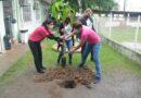 Prefeitura distribui 100 mudas de ipê-rosa em Cordeirinho